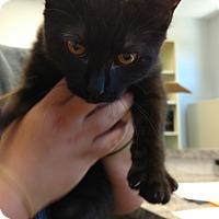Adopt A Pet :: Rachel - Paducah, KY