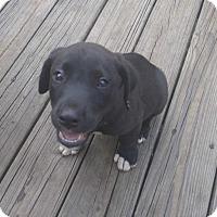Adopt A Pet :: Aden - Southbury, CT