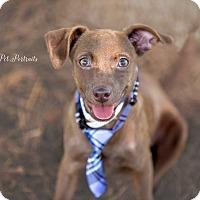 Adopt A Pet :: Lindy - Vidor, TX