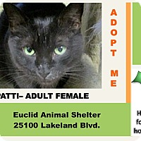 Adopt A Pet :: Patti - Euclid, OH