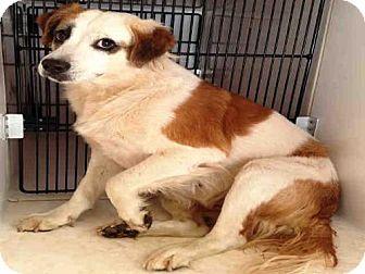 Labrador Retriever Mix Dog for adoption in Atlanta, Georgia - BELINDA