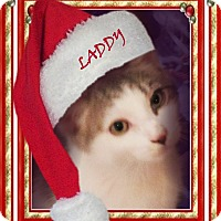 Adopt A Pet :: Laddy - Rochester, NY