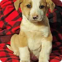 Adopt A Pet :: Legend (5 lb) Video! - Williamsport, MD