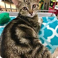 Adopt A Pet :: Bogie - Franklin, IN