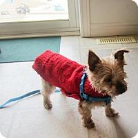 Adopt A Pet :: Elora 3398 - Toronto, ON
