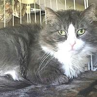 Adopt A Pet :: Nova - E. Claridon, OH