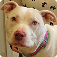 Adopt A Pet :: Molly - Sprakers, NY