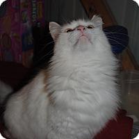 Adopt A Pet :: Luna - Bay City, MI