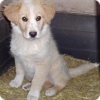 Adopt A Pet :: Rover - Oak Brook, IL