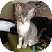 Adopt A Pet :: Kiira - Vancouver, BC