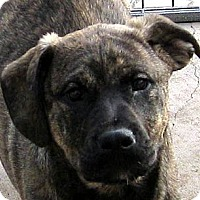 Adopt A Pet :: Baby Thor - Oakley, CA