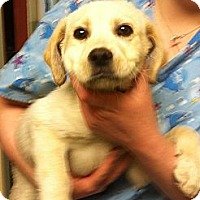 Adopt A Pet :: Tanner - Hazard, KY