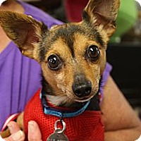 Adopt A Pet :: Wylie - Homewood, AL