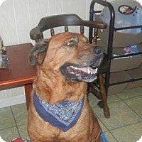Adopt A Pet :: Bear - Antioch, IL