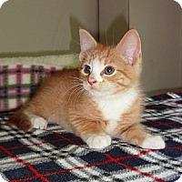 Adopt A Pet :: Watson - N. Billerica, MA