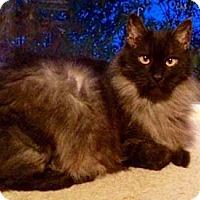 Adopt A Pet :: Magic - Merrifield, VA