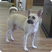 Adopt A Pet :: Hercules - Manning, SC