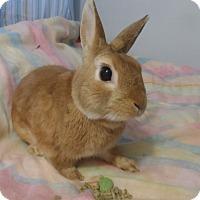 Adopt A Pet :: Prince - Hillside, NJ