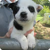 Adopt A Pet :: Bei Bei - Brookside, NJ