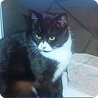 Adopt A Pet :: Clover - McDonough, GA