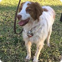 Adopt A Pet :: Sadie - Buena Park, CA