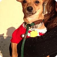 Adopt A Pet :: Meadow (ARSG) - Santa Ana, CA