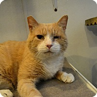 Adopt A Pet :: Kermit - Broadway, NJ
