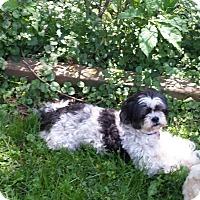 Adopt A Pet :: Maxi - Schofield, WI