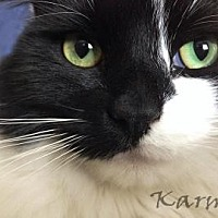 Adopt A Pet :: Karma - Morgan Hill, CA