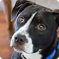 Adopt A Pet :: Seeley - Worcester, MA