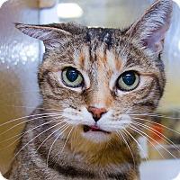Adopt A Pet :: Tabitha - Irvine, CA