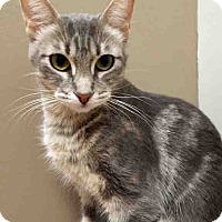 Adopt A Pet :: Agnes - Downers Grove, IL