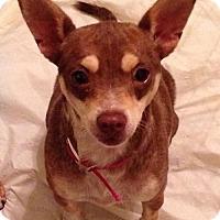 Adopt A Pet :: Kanga (on hold) - Coldwater, MI