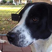 Adopt A Pet :: Cher - Manchester, NH
