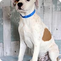 Adopt A Pet :: Plains - Waldorf, MD