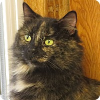 Adopt A Pet :: Prissy - Unionville, PA