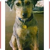 Adopt A Pet :: Ricardo - El Cajon, CA