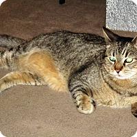 Adopt A Pet :: Bello - Palm Springs, CA