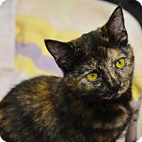 Adopt A Pet :: Tori - White Bluff, TN