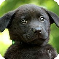 Adopt A Pet :: Fancy - Austin, TX