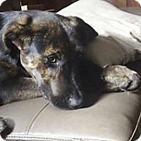 Adopt A Pet :: Beau - Hancock, MI