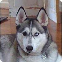 Adopt A Pet :: Kai - Belleville, MI