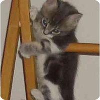 Adopt A Pet :: Cayla - Irvine, CA