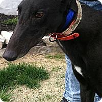Adopt A Pet :: Raja - Florence, KY
