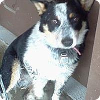 Adopt A Pet :: Tinker - Chewelah, WA