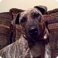 Adopt A Pet :: DAISY MAI - Boca Raton, FL