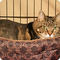 Adopt A Pet :: Leslie - Milford, MA