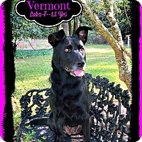 Adopt A Pet :: Vermont - East Hartford, CT