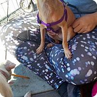 Adopt A Pet :: Titi - San Diego, CA