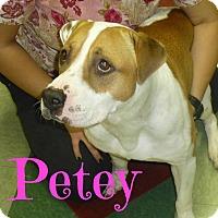 Adopt A Pet :: Petey (Courtesy Listing) - Scottsdale, AZ